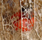 044physalis-fruit